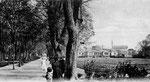 Hofgarten, Fotografie von 1903, Bildnummer: bbv_00071