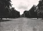 Poppelsdorfer Allee, Fotografie um 1930, Bildnummer: bbv_00727