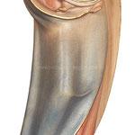statua Madonna della speranza in legno - busto