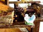 presepe colombo