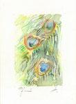 551 Pfau (Datum unbekannt), 14 x 19 cm, Buntstift, Aquarell