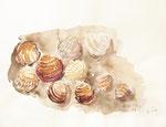 129 Muscheln im Sand, 40x30 cm, Aquarell