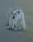 449 Eisbär (2007), 32x43 cm, Pastellkreide auf Tonpapier