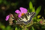 Des papillons,