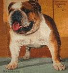 Bulldog Derik Macline
