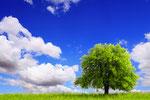 © wajan - Fotolia.com