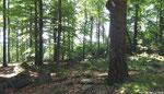 Waldgebiet beim Riesenkopf.
