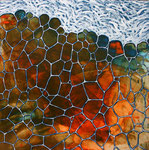 Cellules 4 / dim. 93x93cm.