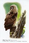 ネパールワシミミズク イラスト 日本の野鳥 制作 イラストレーター たぶき正博 絵はがき