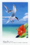 ベニアジサシ イラスト 日本の野鳥 制作 イラストレーター たぶき正博 絵はがき