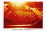 ユリカモメ イラスト 日本の野鳥 制作 イラストレーター たぶき正博 絵はがき