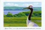 野付半島のタンチョウイラスト 日本の野鳥 制作 イラストレーター たぶき正博 絵はがき