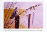 コミミズク イラスト 日本の野鳥 制作 イラストレーター たぶき正博 絵はがき