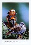 オシドリ 鴛鴦 イラスト 日本の野鳥 制作 イラストレーター たぶき正博 絵はがき