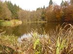 Der Michelsee nördlich von Michelbach