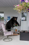 "Bear with Chair, Serie ""L.A."", 2005 @ Gisela Obscura"