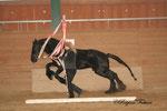 Ingrid und Xantos in voller Action beim Jungpferdetraining 2010 - immer für einen Schnapschuss gut!