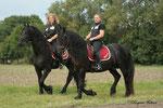 """Die """"Black Youngsters"""" beim Ausreiten, zwei Pferde die am gleichen Tag geboren sind und doch so unterschiedlich!"""