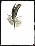 Feder 6, Monotypie auf Papier, 2000, 19x14 cm [ID 20000210]