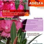 Adelfa