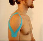 1. Muskelanlage