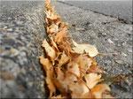 Der Herbst liegt in der G0sse