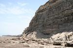 Viedma reserve de peroquet