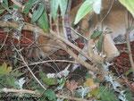 Lucy im Dschungel