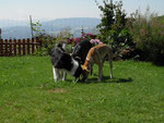3 süße Schnüffelnasen - Joya, Rayo & Lucy