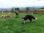 3 Hundchen von 5 'erwischt' :)