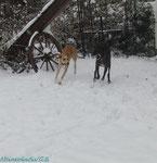 die 2 Schneehasen