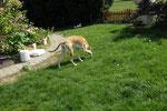 dummdidumm - Lucy stromert durch den Garten