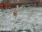 Schneehasi