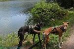 naja, sooooo toll sind die Enten dann auch nicht - die sind Hunde gewohnt und flattern nicht rum :)