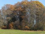 Herbst auf dem Land :)