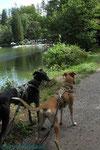 meine 2 Seehunde