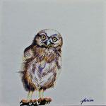 2005 Jonge uil II tekeningetje
