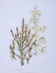 2005 agave ll 60 x 80 cm. € 375