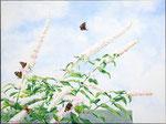 2015 Vlinderstruik   Acrylverf op linnen 60 x 80 cm. € 950,-