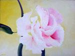 hibiscus 60 x 80 op paneel