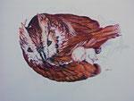 2005 Uil met jong tekening met kleurpotloden op aquarelboard  50 x 70 cm. € 175,-