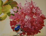 2014 Hortensia met blauwborst. Acrylverf op doek 20 x 30 cm.    € 165,-