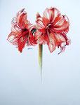 2000 Groeien II getekend met kleurpotloden 50 x 70 cm. € 275,-