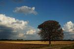abgeerntet, Herbst im Leintal bei Neustadt