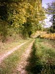 Chemin le long des vignes