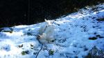 Gefunden, den ersten Schnee der Saison