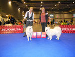 European Dog Show in Brno