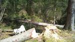 17.04.2011, Baumstamm-Training