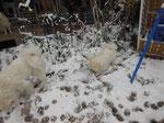 Cool endlich wieder Schnee