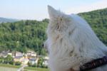 Mai:Ferien in Salzburg; Besuch auf der Festung